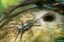 A Cretaceous arachnid Chimerarachne yingi, found trapped in a 100 million year old amber from Myanmar, appears in a handout illustration provided on Feb. 5, 2018.