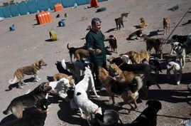 Veterinarian Hamid Ghahremanzadeh, chief of Aradkouh Stray Dogs Shelter, plays with some of his charges on the outskirts of the capital Tehran, Iran, March 5, 2017.