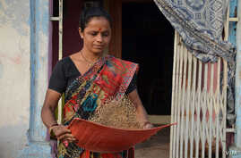 A woman winnows high-iron Dhanshakti pearl millet in Andhra Pradesh, India. A recently published study shows that this new, conventionally-bred variety of pearl millet can provide the full daily iron needs of young children. Photo: Alina Paul-Bossuet
