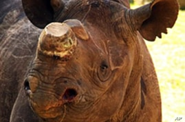 South Africa: 21 Rhinos Poached in January
