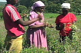 Closing Gender Gap Could Boost World Food Supply
