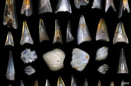 Fish teeth and shark scales from sediment in the South Pacific Ocean dating around the mass extinction event 66 million years ago, photographed under a high powered microscope. (Credit: E. Sibert on Hull lab imaging system, Yale University)