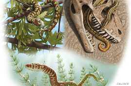 An artist rendering from oldest-known snake fossils shows Paleo reconstructions of three Jurassic to Lower Cretaceous snakes: Portugalophis lignites from Upper Jurassic period in a ginko tree from the coal swamp deposits at Guimarota, Portugal (top l