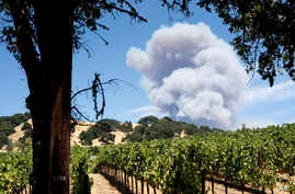 Smoke billows behind a vineyard in Hopland, California, as the River Fire burns, July 30, 2018.