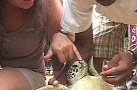 Conservation Groups in Coastal Kenya Work to Save Endangered Turtles