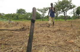 Development experts want more young Africans to have a stake in African agriculture like this young man in the Central African Republic. VOA/Nico Colombant