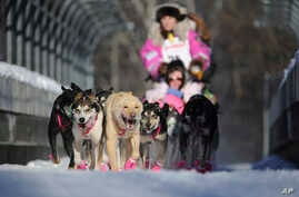 Dee Dee Jonrowe, of Willow, mushes during the ceremonial start of the Iditarod Trail Sled Dog Race in Anchorage, Alaska, March 4, 2017.