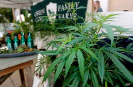 "Marijuana plants are displayed at the Green Goat Family Farms stand at ""The State of Cannabis,"" a California industry group meeting in Long Beach, California, on Sept. 28, 2017."