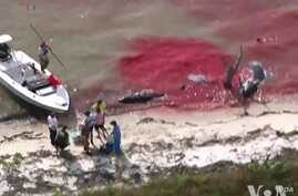 At Least 10 Whales are Dead and Dozens Stranded off Florida's Southwest Coast