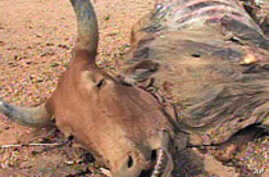 Masaais in Southern Kenya Suffer From Drought