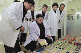 FILE - North Korean leader Kim Jong Un (C) provides field guidance at Kumkop General Foodstuff Factory for Sportspersons in this undated photo released by North Korea's Korean Central News Agency (KCNA) in Pyongyang, Jan. 8, 2015.