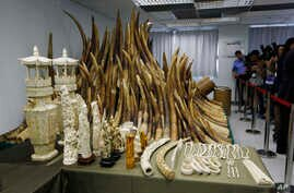 Journalists take pictures of the confiscated African ivory which will be destroyed as Hong Kong cracks down on an illegal wildlife trade that is devastating Africa's elephant population, Hong Kong, May 15, 2014.