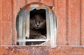 """Calin, a European cat, is seen at the association """"Les Petits Vieux"""", home for dozens of elderly animals, including dogs, cats, pigs and goats in Chievres, Belgium."""