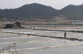 FILE- A salt farm owner walks around his salt farm on Sinui Island, South Korea. Eight men who had been held as slaves at South Korean salt farms for several years have sued the government for alleged negligence and police inaction they say largely c