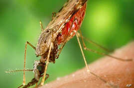 Malaria Drug Resistance in Cambodia Not a Surprise