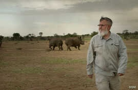 "John Hume, the worlds largest rhino breeder walks among his  rhinos. Mr. Hume had invested more than $50 million into his rhino project. He currently is the custodian of over 1,500 rhinos. (Photo courtesy of  ""Trophy"")"