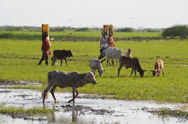 Female residents of the Tana River delta carry water in eastern Kenya, June 2009. (file photo)