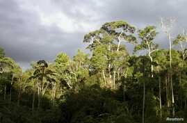 Forest on a plateau in a bauxite concession is shown at Nassau Mountains in North Suriname in this handout courtesy of Hans ter Steege taken in 2003.