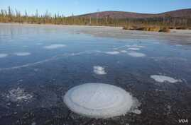 Methane bubbles up from the thawed permafrost at the bottom of the thermokarst lake through the ice at its surface. (Katey Walter Anthony/ University of Alaska Fairbanks)