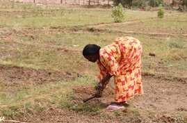 A woman plows the earth in the village of Woudourou, in Senegal's Matam region, May 17, 2017. (S. Christensen/VOA)