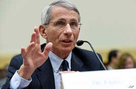 Dr. Anthony Fauci, director of the National Institute of Allergy and Infectious Diseases, testifies before the House Foreign Affairs subcommittee on Africa, Global Health, Global Human Rights, and International Organizations hearing on the Ebola viru...