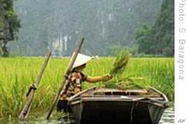 Climate Change Could Contribute to Higher Food Prices in Developing World