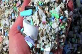 Plastic Trash in Oceans Enters Marine Food Chain