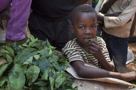 A young boy eats some of the leaves that a market-seller, left, is chopping up for sale at the market in the Bimbo neighborhood of the capital Bangui, Central African Republic, January 1, 2013.