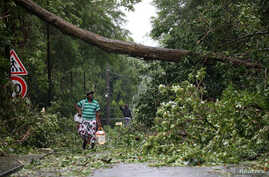 A man looks at a fallen tree as he walks along a street after the passage of Hurricane Maria in Pointe-a-Pitre, Guadeloupe island, France, Sept. 19, 2017.