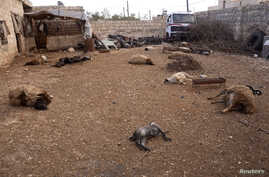 Animal carcasses lie on the ground, killed by what residents said was a chemical weapon attack on Tuesday, in Khan al-Assal area near the northern city of Aleppo, Mar. 23, 2013.