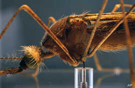 Microbe Could Help Battle Malaria