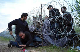 Syrian refugees cross into Hungary underneath the border fence on the Hungarian - Serbian border near Roszke, Hungary on Aug. 26, 2015.