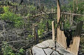 Indonesia Hopes to Sell Carbon Credits for Its Forests