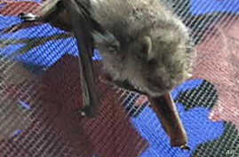 Ecologist and Rehabilitator Educates on the Benefits of Bats
