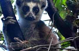 Madagascar Moves to Protect Precious Forests