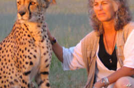 Laurie Marker, founder and executive director of the Cheetah Conservation Fund