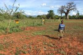 Charity Mwangome walks along the beehive fence she has built at her farm to help protect her crops from elephants, in Taita-Taveta area, Kenya, April 19, 2016.