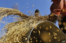 Climate Change Already Reducing Crop Yields