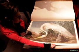 """FILE - A Sotheby's employee turns a page of John James Audubon's """"Birds of America,"""" at Sotheby's in London, Dec. 6, 2010."""