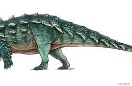 A life recreation of the newly discovered armored dinosaur named Zuul crurivastator from northern Montana seen in this illustration provided by the Royal Ontario Museum in Toronto, Canada, handout photo received May 9, 2017.