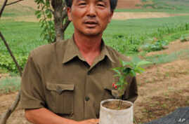User groups are raising fruit seedlings, which are often not available from the local government forestry nursery.