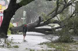 A man stands in front of an uprooted oak tree on Louisiana Avenue as Hurricane Isaac makes land fall in New Orleans, Louisiana August 29, 2012.