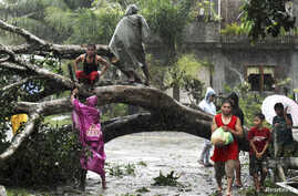 Residents saw an uprooted tree to clear the road after Typhoon Bopha hit Tagum City, southern Philippines December 4, 2012.