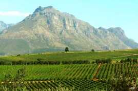 The view across a wine farm in South Africa's Western Cape region