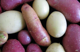Scientists Unravel Potato's Genetic Blueprint