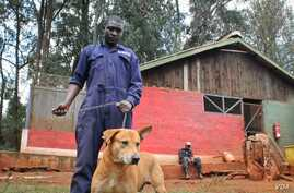 Dogs at Kenya's KSPCA, which deals regularly with cases of rabies. A new vaccination initiative aims to eliminate the disease without resorting to dog culls. December 17, 2014. (Hilary Heuler / VOA News)