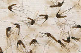 New Malaria Vaccine Passes Safety Test