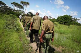 Armed members of the Kenyan security forces march in single file along narrow paths leading through the dense swamp and forest, searching for the attackers, in the remote village of Kaisari, near Mpeketoni, about 60 miles (100 kilometers) from the So