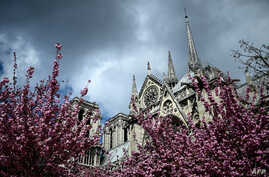 The Notre-Dame de Paris Cathedral is seen amid blossoming trees on April 3, 2019 in Paris.