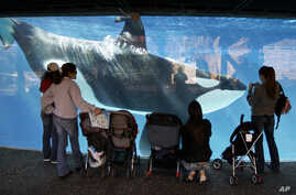 FILE - People watch through the glass as a killer whale passes by while swimming in a display tank at SeaWorld in San Diego, Nov. 30, 2006.